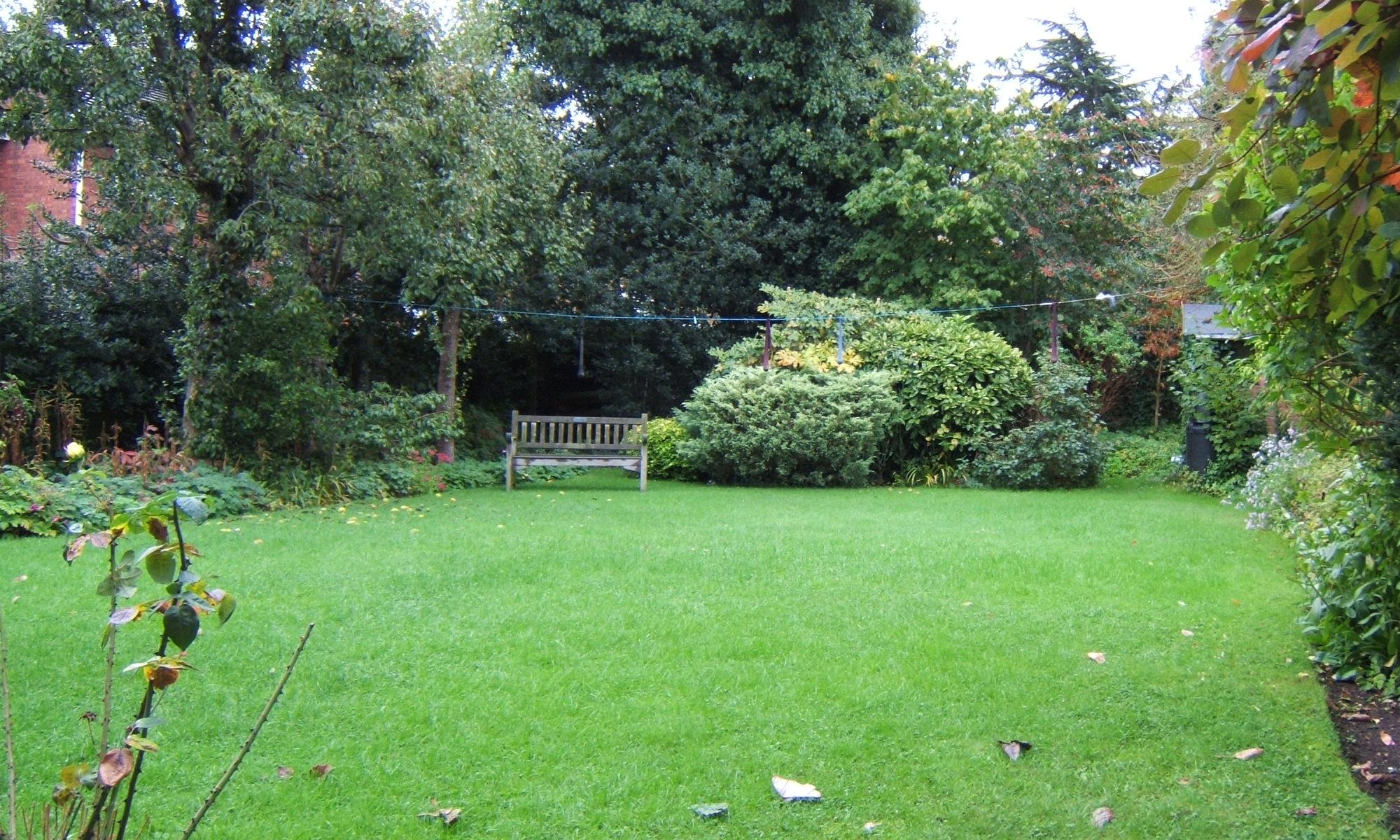 garden with empty lawn and a bench